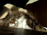 20110215-Cats-P2150626