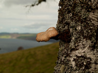 Fungus and Loch Ness